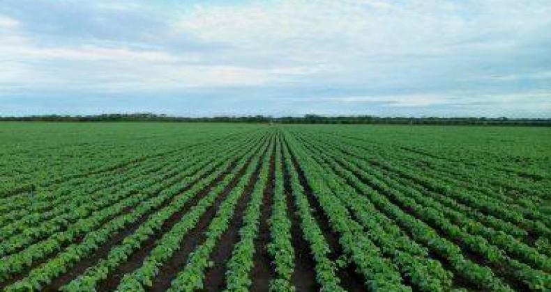 Soja: Ministério da Agricultura publica zoneamento para 15 estados e DF